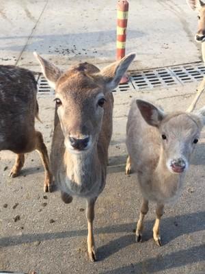 常州 目的地介绍  8常州淹城野生动物园 位于常州市武进中心城区,是