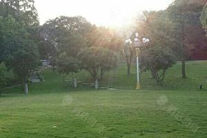 阳光大草坪